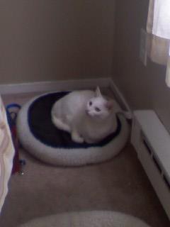 Jasper in bed